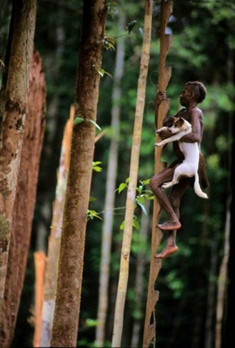 Tribo-que-vive-em-árvores-8