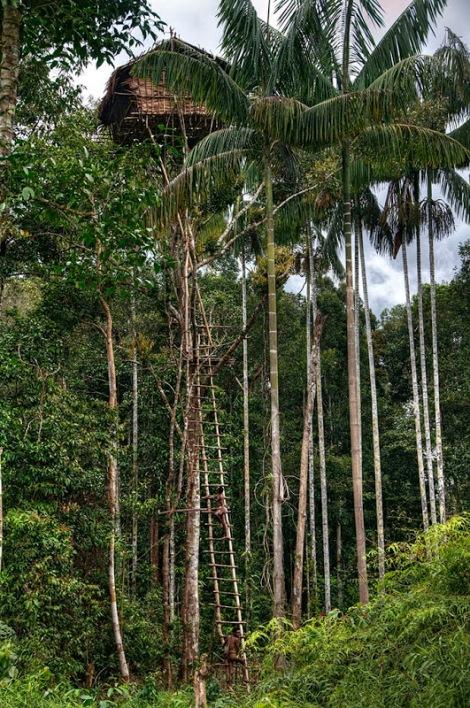 Tribo-que-vive-em-árvores-81