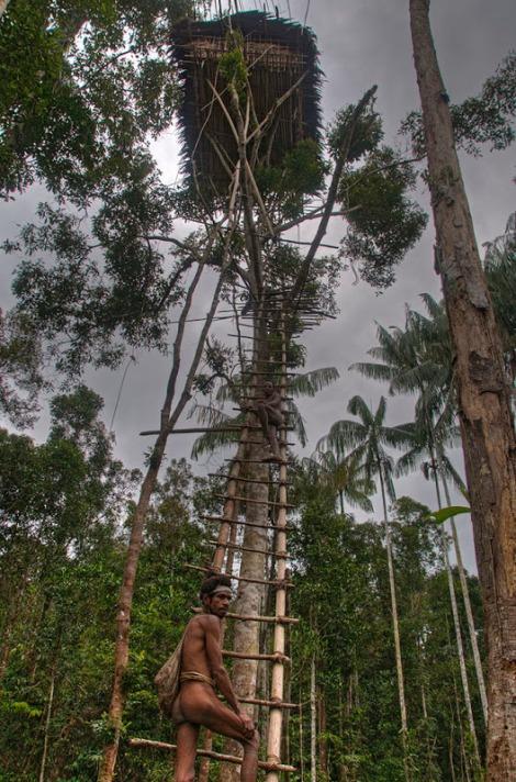 Tribo-que-vive-em-árvores-9